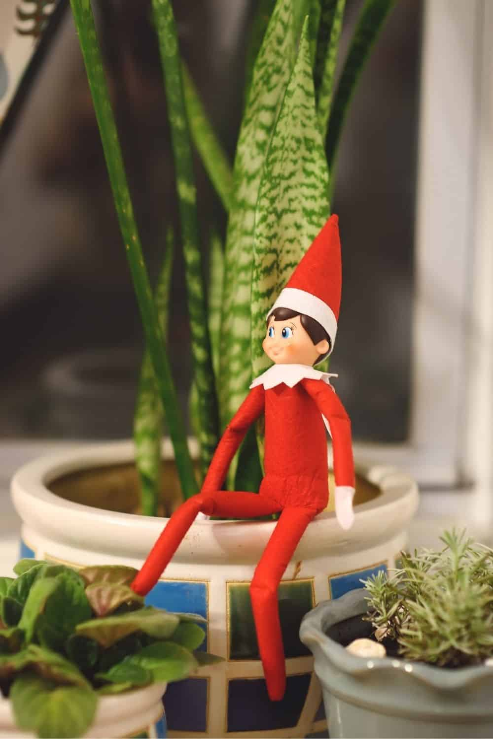 Elf on the Shelf sitting in a potted plant